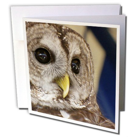3dRose Barney The Owl - Greeting Cards, 6 x 6 inches, set of 6 (gc_7332_1) (Barney Birthday Invitations)