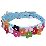 Pet Moon Soft PU Leather Dog Collar Flower Colour Padded Mulitple Colours (Blue, Mediem(11.6 - 15.2 in))