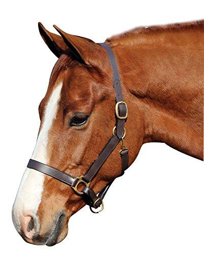 Leather Horse Halter - Henri de Rivel Advantage Leather Halter