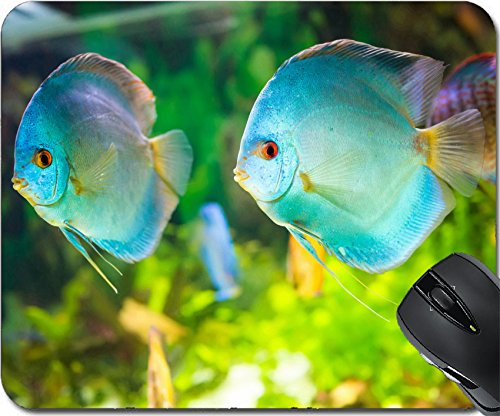 MSD Natural Rubber Mousepad Mouse Pads/Mat design: 27636226 Symphysodon discus in an aquarium on a green background