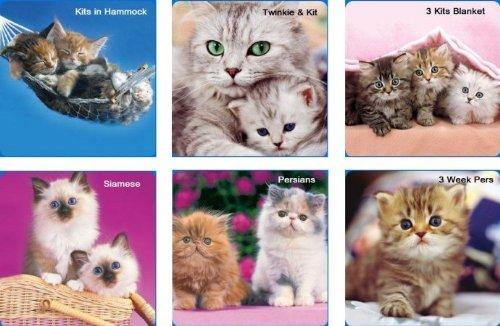 Hi-Look Inc. HL24021B Keith Kimberlin Kittens II (Assorted) Microfiber Cloths