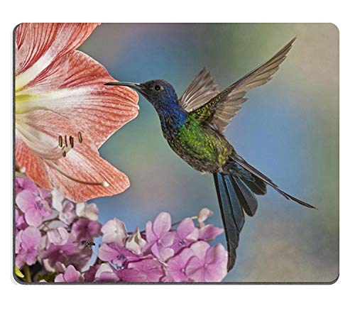 (Mouse mat Gaming Mouse Pad) Natural Rubber Mousepads A Beautiful The Swallow Tailed Hummingbird Eupetomena macroura from The countyside of ()