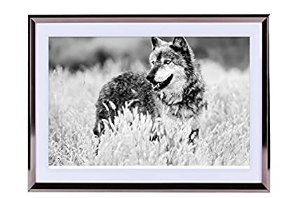Amazon.com: wolf looking out grass hunting-Animal - Art Print ...