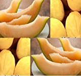 buy New Crenshaw Melon Cantaloupe 50 Seeds - Combined S&H now, new 2020-2019 bestseller, review and Photo, best price $5.99