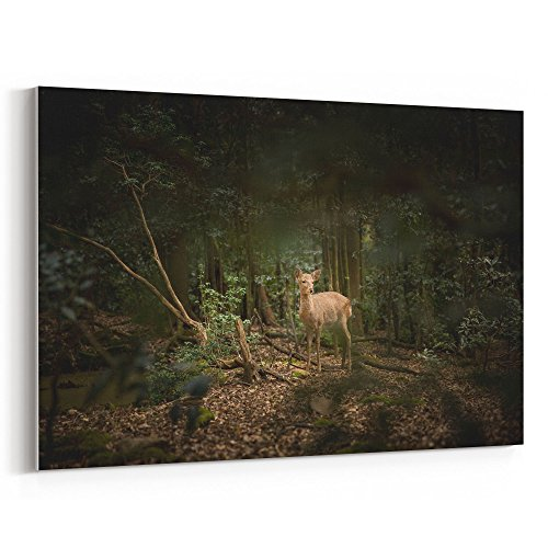 (Westlake Art - Deer Fawn - 16x24 Canvas Print Wall Art - Canvas Stretched Gallery Wrap Modern Picture Photography Artwork - Ready to Hang 16x24 Inch)