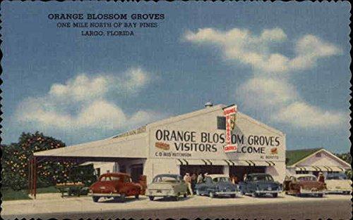 Orange Blossom Grove - 4