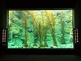 The big tank at Birch Aquarium, San Diego, California, USA. The kelp is Macrocystis pyrifera, the bi... offers