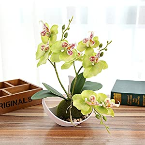 FYYDNZA Fashion Three Fork Butterfly Orchid Bonsai Flower Artificial White Potted Set Wedding Home Wedding Party Decoration,Green 116