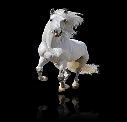 Kayra Decor White Horse On Black Background 3D Wallpaper Print Decal Deco Indoor Wall Mural