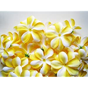 "(100) Yellow White Hawaiian Plumeria Frangipani Silk Flower Heads - 3"" - Artificial Flowers Head Fabric Floral Supplies Wholesale Lot for Wedding Flowers Accessories Make Bridal Hair Clips Headbands Dress 13"