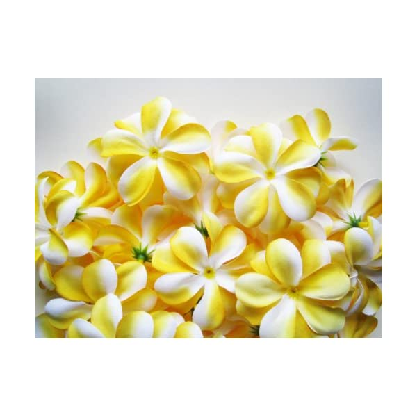 (100) Yellow White Hawaiian Plumeria Frangipani Silk Flower Heads – 3″ – Artificial Flowers Head Fabric Floral Supplies Wholesale Lot for Wedding Flowers Accessories Make Bridal Hair Clips Headbands Dress