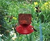 2 PACK Dr. JB complete Switchable 48 oz Feeder with Red Flowers (Bulk)