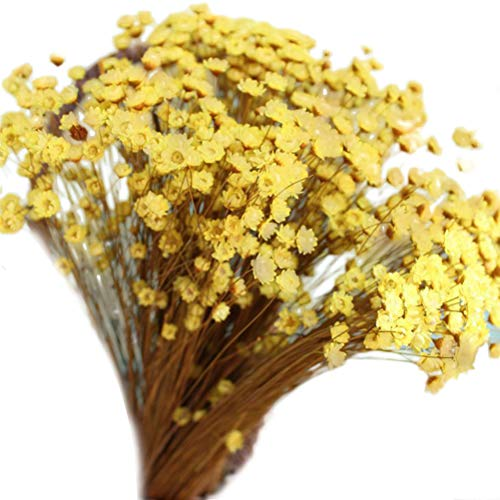 Vosarea 100pcs Lovely Mini Daisy Decorative Dried Flowers Small Star Flower Natural Floral for Photograph Wedding Home Decoration (Yellow)