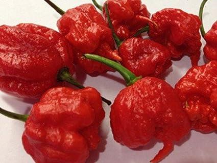 amazon com yakovseeds carolina reaper pepper seeds 20 seeds
