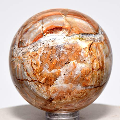 48mm Petrified Wood Sphere Multicolor Natural Crystal Ball Fossil Mineral Fossilized Tree Earth Energy Stone - Madagascar + Plastic Stand by HQRP-Crystal (Image #2)