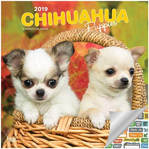 Chihuahua Puppies Calendar 2019 Set - Deluxe 2019 Chihuahua Puppies Wall Calendar with Over 100 Calendar Stickers (Chihuahua Puppies Gifts, Office Supplies)