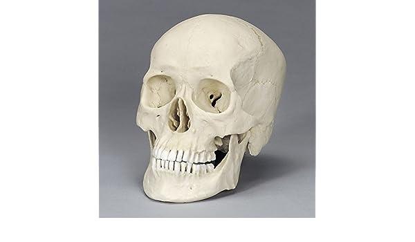 bone clones coupon