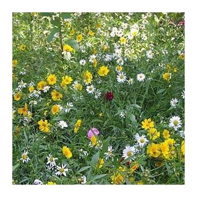 Outsidepride Rock Garden Perennial Wild Flowers - 5000 Seeds: Garden & Outdoor