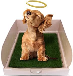 Amazon Com Rascal Dog Litter Box Quot Big Squirt Quot With Grass