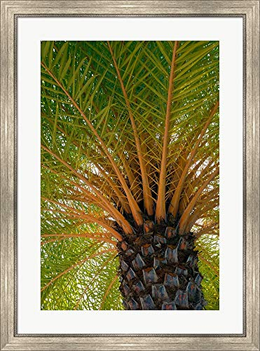 (British Virgin Islands, Scrub Island Close Up of The Underside of A Palm Tree by Kevin Oke/DanitaDelimont Framed Art Print Wall Picture, Silver Scoop Frame, 27 x 36 inches)