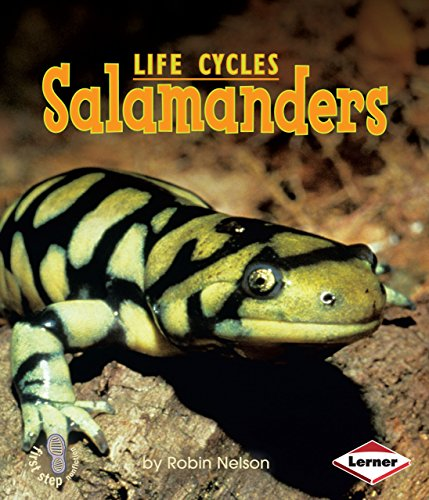 Salamanders (First Step Nonfiction: Animal Life Cycles)