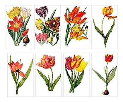 tulip card set flowers floral botanical nature watercolor blue tulip note cards blank notecards folded stationery stationary