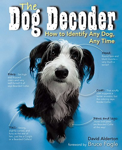 Dog Decoder: How to Identify Any Dog, Any Time