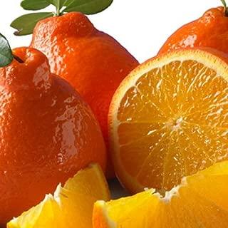 product image for Honeybell Oranges (Tangelos) 1/2 Bushel