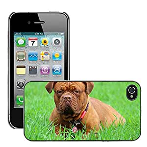 Super Stella Slim PC Hard Case Cover Skin Armor Shell Protection // M00145317 Barbara De Bordeaux Dogue De Bordeaux // Apple iPhone 4 4S 4G