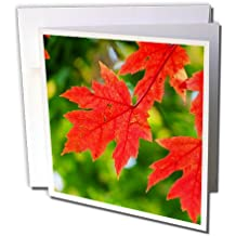 Mark Grace PLANTS - flowers, leaves and trees - An image of leaves that have turned Red in October, Autumn colors - 12 Greeting Cards with envelopes (gc_243280_2)