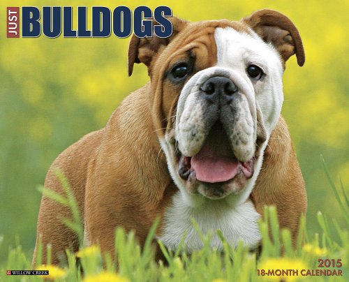 english bulldog 2015 calendar - 1