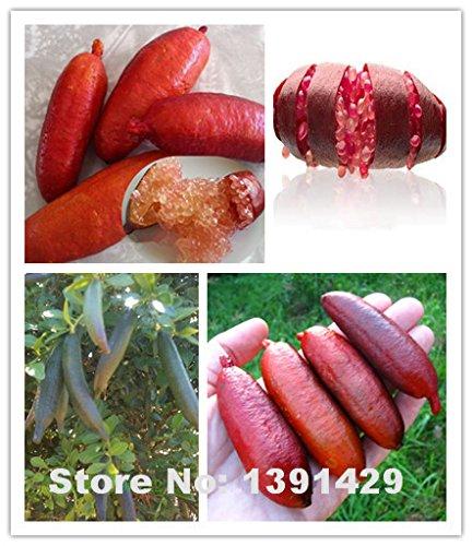 Hot Sale! 20PCS rare pomegranate seeds, Ice Pink Finger Lime Seeds,organic fruit seeds,Balcony Rare Plants bonsai home & garden supplies
