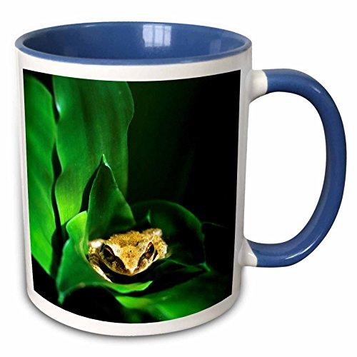 3dRose mug_72305_6