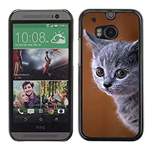 Etui Housse Coque de Protection Cover Rigide pour // M00108216 Gatito Gato Animal British Blue Cat // HTC One M8