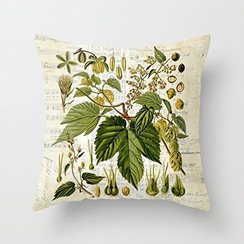 Rdsfhsp Plant Encyclopedia Common Hop Botanical Print On Vintage Almanac Collage Cushion Covers Throw Pillow Covers For Decorating Sofa Car Bedroom Etc Or Gifts Cotton 18x18 ()