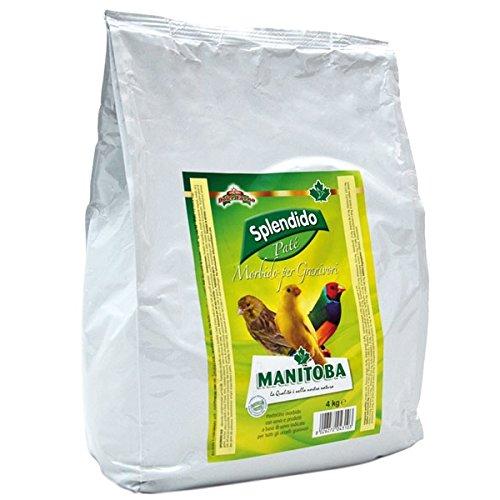 Manitoba Splendido Pasta Amarilla Humeda 4 kg