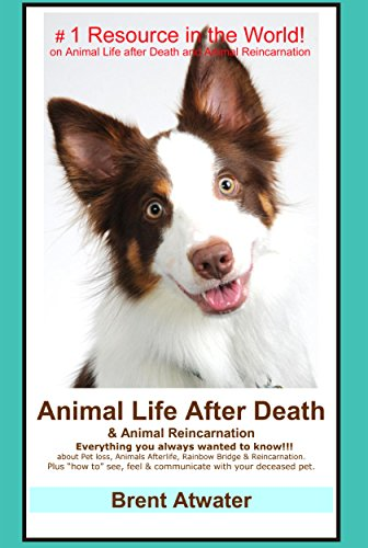 Animal Life After Death & Animal Reincarnation- Everything you Always Wanted to Know