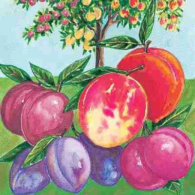 fruit-cocktail-tree-peach-apricot-nectarine-no-shipping-to-ca-az-ak-hi-or-or-wa-per-your-state-laws