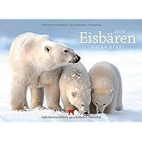 Eisbären 2019, Wandkalender im Querformat (45x33 cm) - Tierkalender mit Monatskalendarium