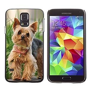 Cute Painting Slim pc Cover - Samsung Galaxy S5 ( Cute Happy Yorkie Terrier )