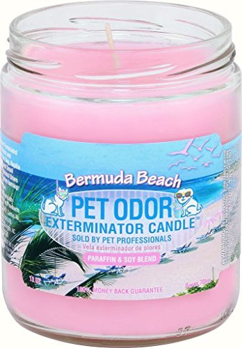 Pet Odor Exterminator Candle (Best Odor Eliminating Candles)