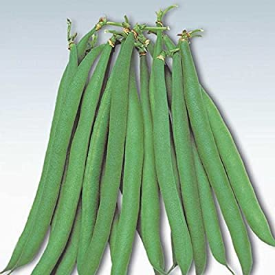 Masai Bush Bean Garden Seeds - Non-GMO, Heirloom Baby French Filet Bean Vegetable Gardening Seeds