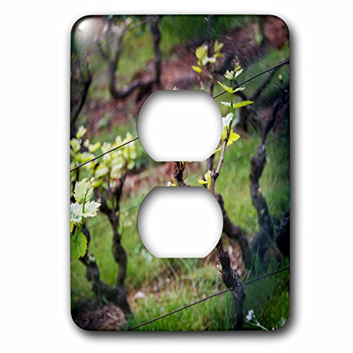 Danita Delimont - France - Signs of spring at the Vineyard, Paris, France - Light Switch Covers - 2 plug outlet cover - Outlet Grapevine