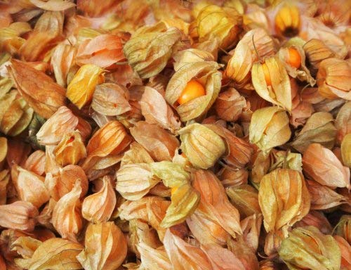 Earthcare Seeds Aunt Mollys Ground Cherry 50 Seeds Physalis pruinosa (Certified Organic By MOSA)