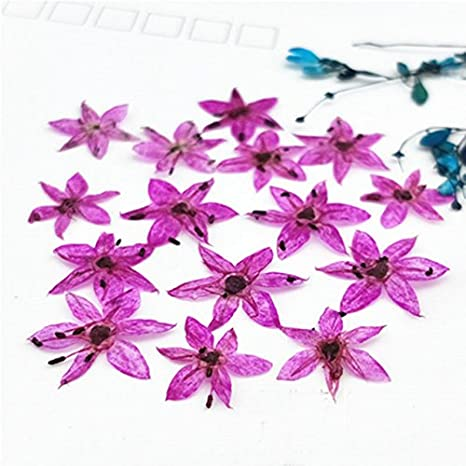 Pinkdose Rose Red Small Star Shaped Dried Pressed Small Gifts For
