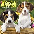 Just Beagle Puppies 2018 Wall Calendar (Dog Breed Calendar)