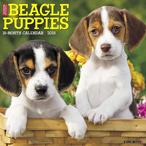Just Beagle Puppies 2018 Calendar