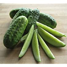 Organic OP NON-GMO National pickling Cucumber 50+ seeds 6-inch, fruits great pickled or fresh in salads High yielding