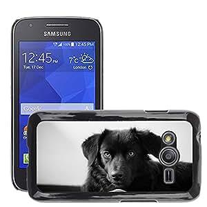 Etui Housse Coque de Protection Cover Rigide pour // M00112650 Perro Labrador Head Pet Mentira // Samsung Galaxy Ace4 / Galaxy Ace 4 LTE / SM-G313F
