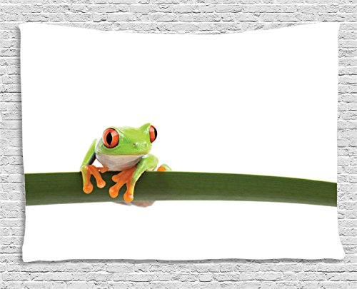 Ambesonne Animal Decor Collection, Red Eyed Tree Frog Perches on a Long Slim Leaf Tropic Rainforest Animal Wild Life Photo, Bedroom Living Room Dorm Wall Hanging Tapestry, 60 X 40 Inches, Green White (Long Perch)